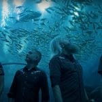 Mastodon se produira en acoustique au Georgia Aquarium